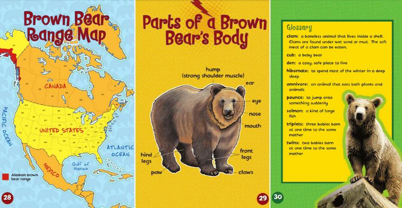 Let's Look at Brown Bears screenshots